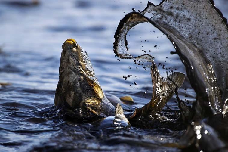 تصاویر منتخب گاردین از حیات وحش