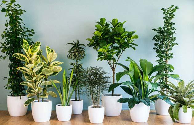 گیاهان آپارتمانی را چگونه گردگیری کنیم؟
