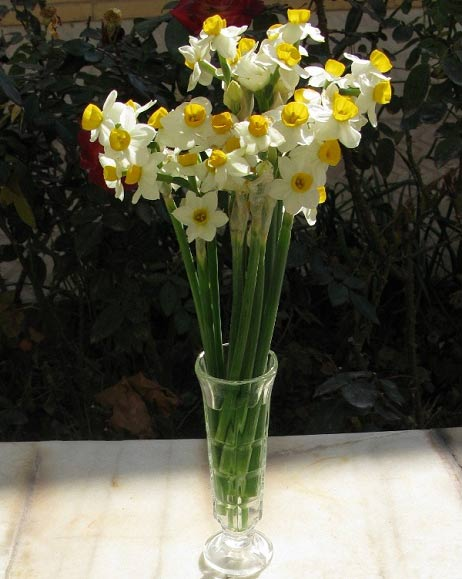 روش کاشت و نگهداری گل نرگس