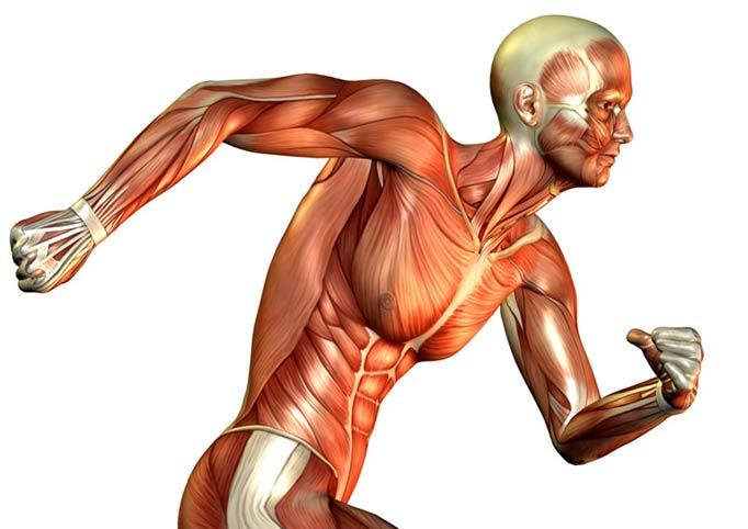 حقایق بسیار جالب در مورد بدن انسان
