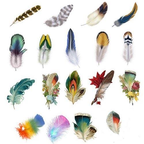 پر پرندگان از جنس چیست؟