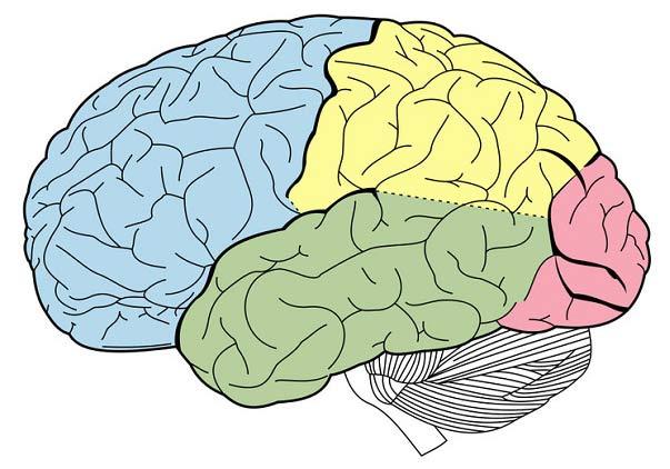 آپراکسی مغز و انواع آن