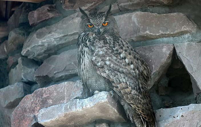 تصاویری از باغ پرندگان تهران