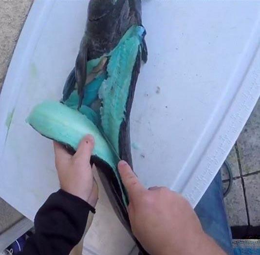 گوشت این ماهی آبی است! + عکس