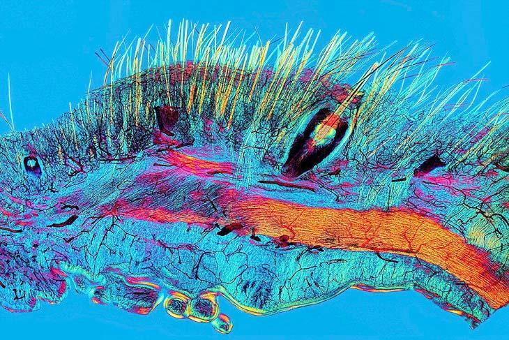نماهایی نزدیک و شگفت انگیز از سلول های زنده + تصاویر