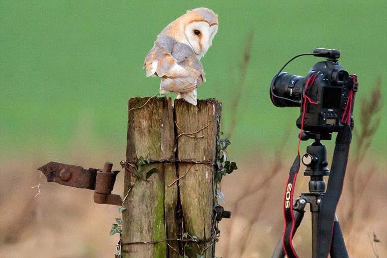 تصاویر زیبا از مسابقه عکاسی حیات وحش