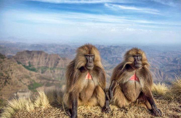 تصاویر جالب و زیبا از حیوانات