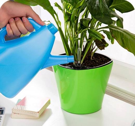 نحوه آبیاری گیاهان در تابستان