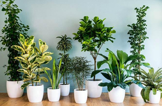 بهترین زمان برای تعویض محل گیاهان