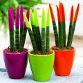 گیاهان مخصوص خانم ها