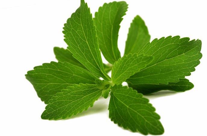 گیاه استویا چیست و چه خواصی دارد؟