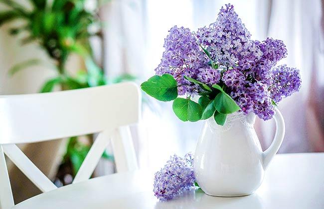 فواید نگهداری گل در خانه