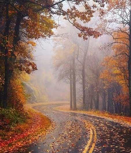 بوی تر پاییز: دما تا ۱۰ درجه کاهش مییابد.