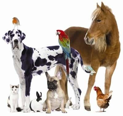 از کجا حیوان خانگی بخریم