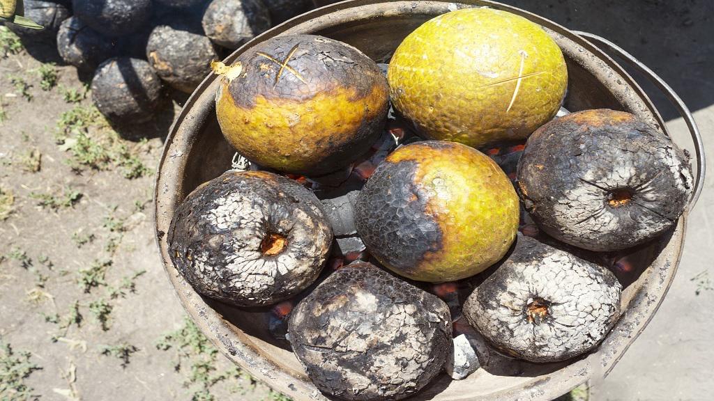 امید دانشمندان به میوه نان برای روزهای قحطی