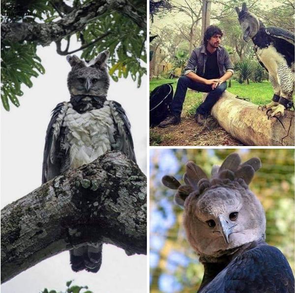 پرنده عظیمالجثهای که باور نمیکنید واقعی باشد